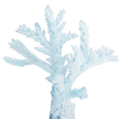cyan small isolated coral isolated branch
