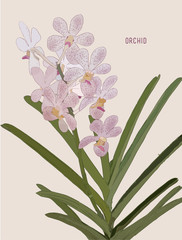 Painted Pink Orchids vector.
