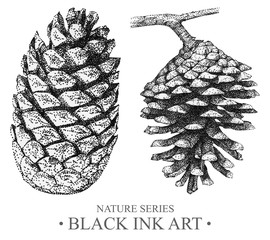 Illustration with cones drawn by hand with black ink. Graphic drawing, pointillism technique. Floral element for design.