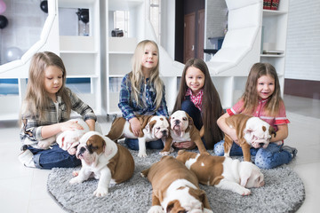 Cute girls play with puppies bulldog on the carpet