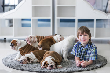 Cute boy lies on the floor on carpet with puppies of English bulldog