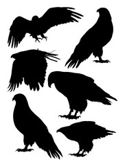 Eagles birds animal silhouette. Good use for symbol, logo, web icon, mascot, sign, or any design you want.