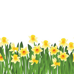 Foto op Canvas Narcis Green grass with yellow narcissus flowers isolated on white. Vector illustration