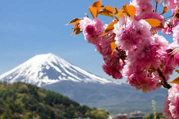 Cherryblossom and Mount Fuji Japan