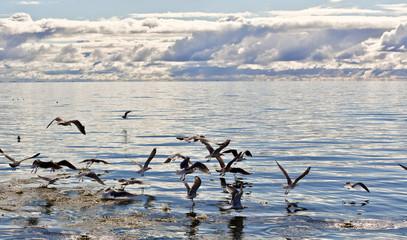 Sea gulls in the sea