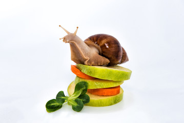 A snail on the apple and carrot tower.