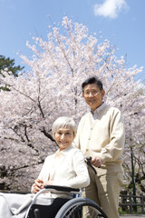 Wheel chaired old couple looking at cherry blossoms