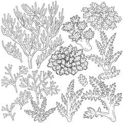 Sketch of  corals  set