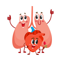 Funny, smiling human lungs and heart characters, internal organs in the chest, cartoon vector illustration isolated on white background. Healthy human lungs and heart characters, health care concept