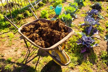 carriola con il letame per concimare l'orto
