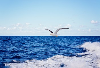 White seagull flying over blue ocean