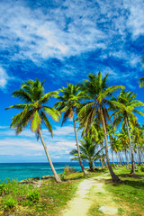 A winding path that leads through a palm tree forest near caribbean sea. Las Galeras, Samana, Dominican republic