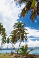 High palm trees on the ocean coast. Vacation concept. Samana, Dominican Republic