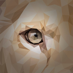 Lioness eye cat animal low poly design. Triangle vector illustration.