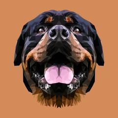 Rottweiler animal low poly design. Triangle vector illustration.