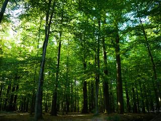 Grüne Baumlandschaft in den Himmel ragend