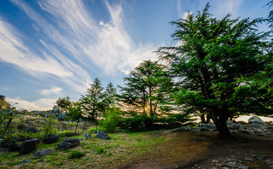 Colorful landscape nature photo of trees on a mountain against background of blue sky and clouds and sunset