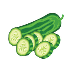 slices of green cucumber on white background. vector illustration