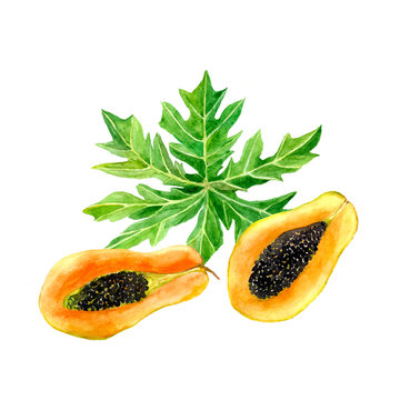 Watercolor papaya fruit with leaf isolated on a white background. Half slice hand drawn illustration..