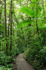 Stone path in rainforest Monteverde Costa Rica