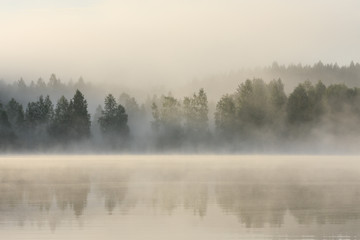 Foggy forest and lake at dawn