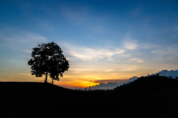 Sunrise with a silhouette big tree at countryside Thailand