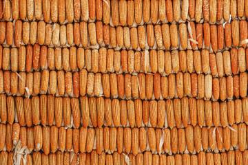 corn staff pattern background