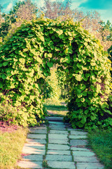 Landscape design in the garden. Arch from trees
