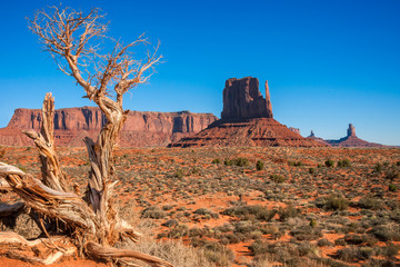 Dormant tree in Monument Valley