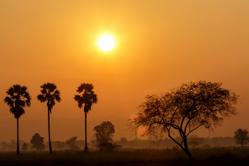 Silhouette Palm tree with sun settitng