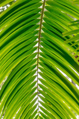 Palm leaves green background pattern