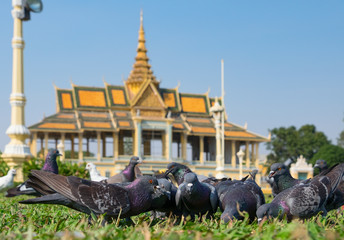 The pigeons in the square in front of the Royal Palace