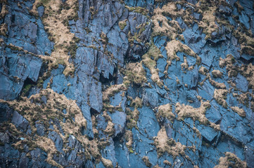 Detail of Grass growing on side of cliff face