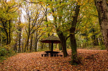 Autumn scene in the park, mountain forest