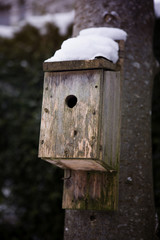 wooden bird house covered in snow