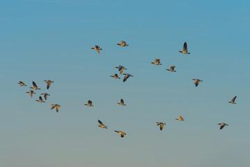 Birds flying in sunlight in spring