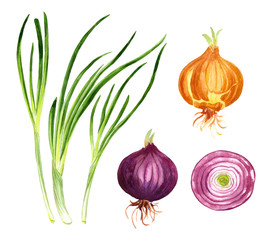 onion set, green, red and yellow onion, watercolor vegetable illustration for cookbook,recipe. menu , market banner design