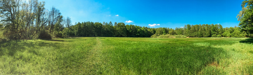 panorama of grass landscape with forest in the background