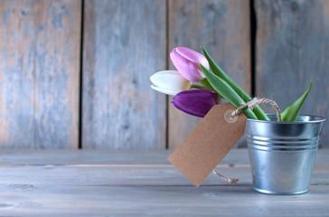 Fototapete - Tulips