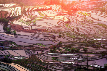Photo sur Plexiglas Les champs de riz Terraced rice fields in Yuanyang, China.
