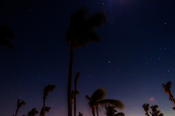 Night sky long exposition with stars and coconut trees in the Bahamas.