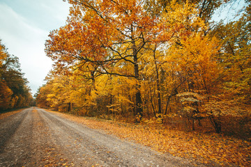 Old road in the autumnal forest