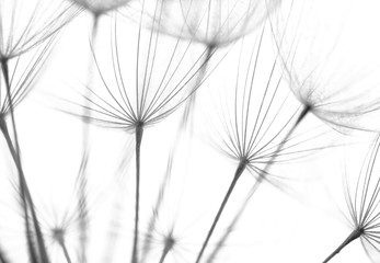 Abstract macro photo of plant seeds. Black and white