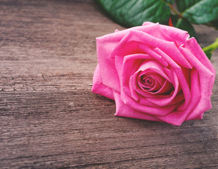 pink rose head on the wooden background