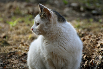 White cat with black spots.