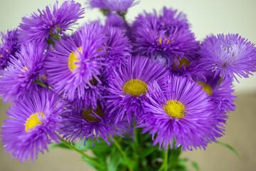wild  flowers, gift spring bouquet. declaration of love.