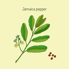 Allspice, or Jamaica Pepper