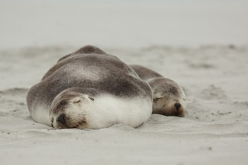 Sea lions sleeping on beach