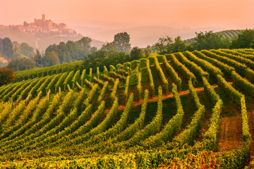 Italy, Piedmont,Cuneo district, Langhe, the vineyards and the castle of Castiglione Falletto