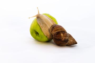 A snail on a big green apple